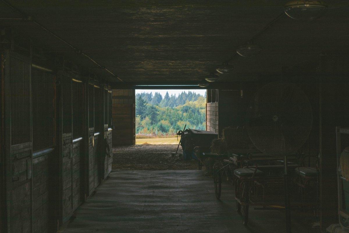 Più al sicuro in una stalla